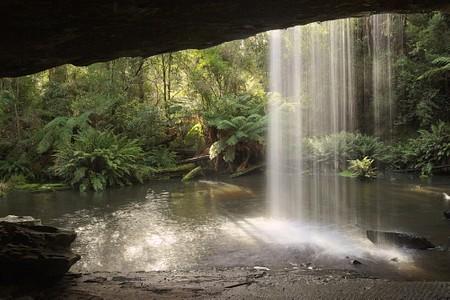 Great Otway National Park  #victoria #australia