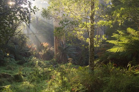 Cold morning in the Great Otway National Park  #victoria #australia