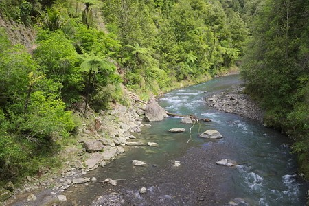 Pakihi stream in Bay of Plenty